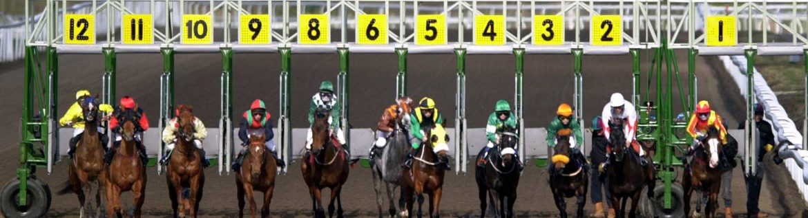 Horse race betting for beginners convert betting odds to probability calculator